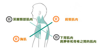 computer shoulder muscle physiotherapy